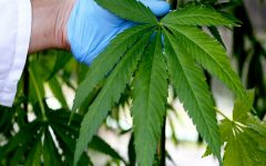 Thailand to Legalize Medical Marijuana and It Could Change Everything