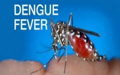 HEALTHLarge Outbreak of Dengue Fever Reported in Northeastern Thailand
