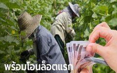 www.เยียวยาเกษตรกร.com เช็กผลโอนเงิน เริ่ม 15 พ.ค. นี้ เกษตรฯ จ่อตั้งศูนย์ร้องทุกข์ช่วยเพิ่มเติม