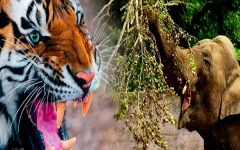 Thailand Launches Wildlife Campaign Against Ivory and Tiger Products