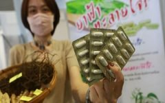 Thailand to Use Green Chiretta to Treat Asymptomatic Covid-19 Patients